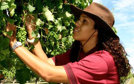 winesisters